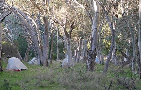 Waukarie Creek Camp site on the Heysen Trail