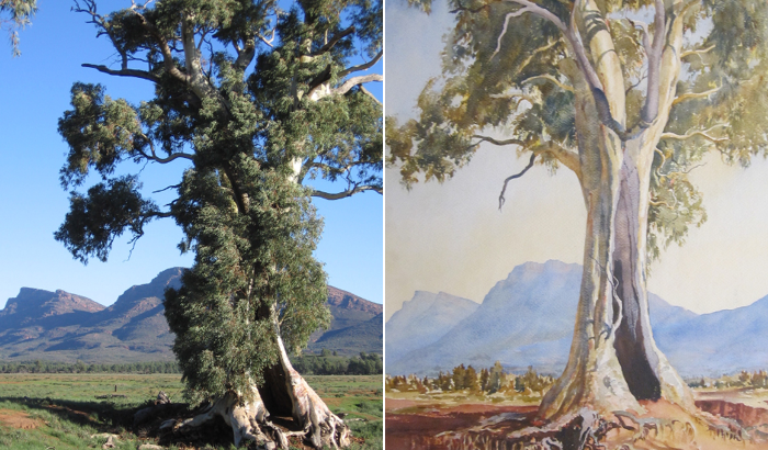 Cazneaux Tree comparison
