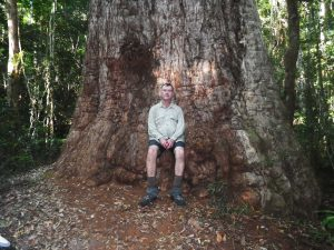 Andrew sitting on the Giant Tallowwood tree